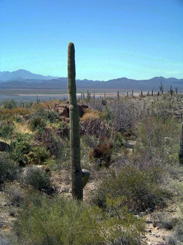Desert Museum, Tucson