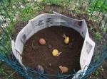 The Lazy Person's Potato Garden