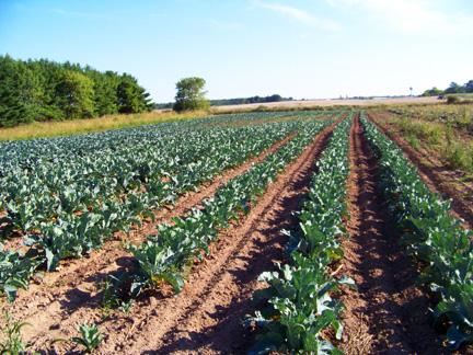 Rare Earth Farm Field