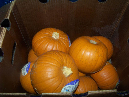Case of Pie Pumpkins
