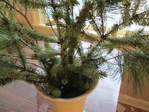pine-add-spruce