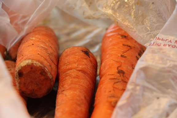 Old carrots