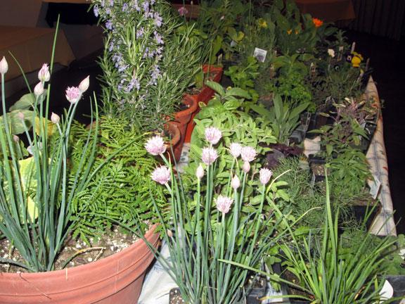 A Kitchen Herb Garden