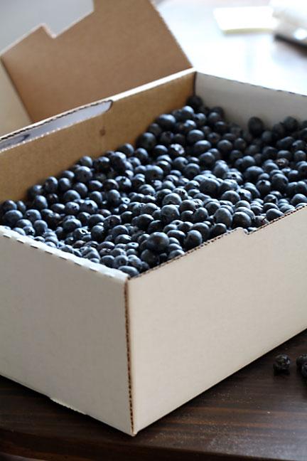 10 lbs of blueberries!