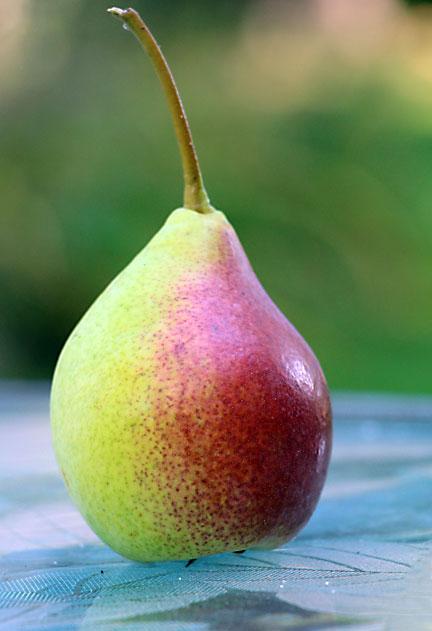 Ripe pear!