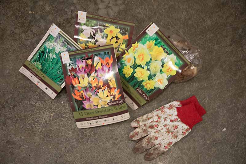 Keep your house cozy & beautiful this winter with a winter bulb garden. Easy step by step guide on forcing bulbs for flowers in February.