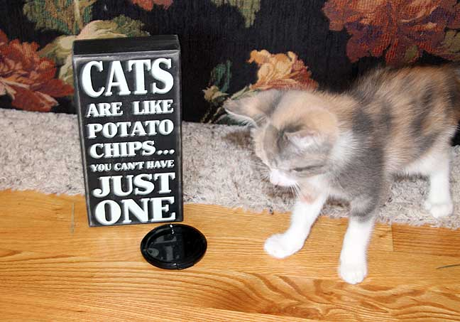 Kitten and Cat Sign
