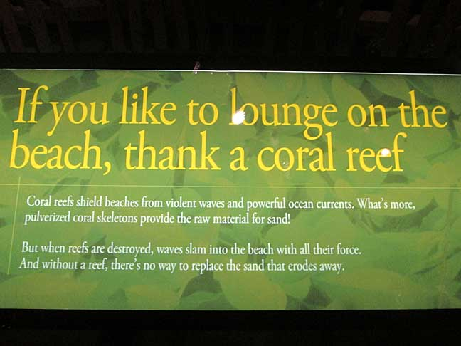 Shedd-Coral-Reef-Sign