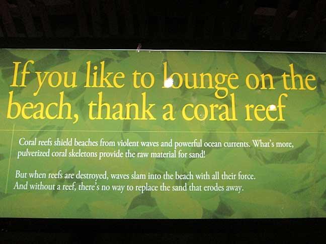 Shedd-Coral-Reef-Sign