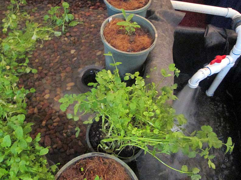 Growing Power Acquaponics system