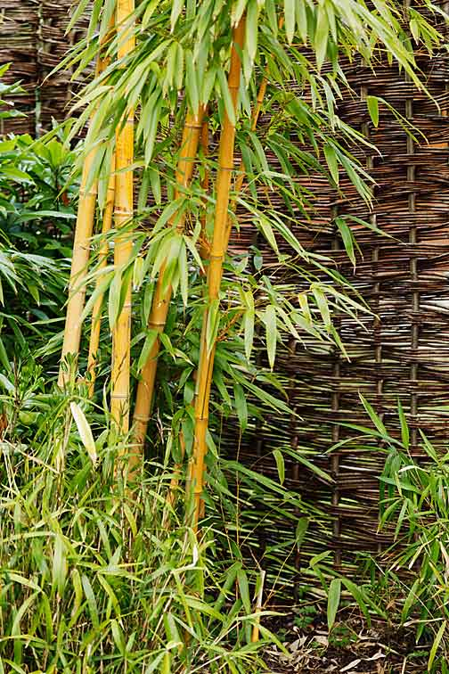 Bamboo (by Petr Kratochvil)