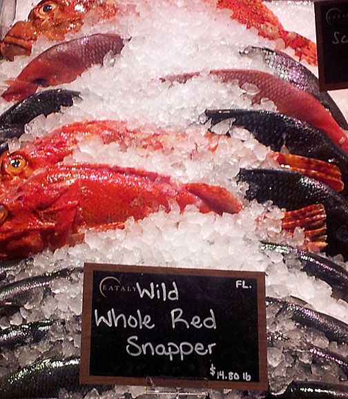 Beautiful red snapper!