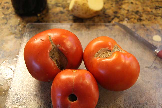 ugly-tomatoes