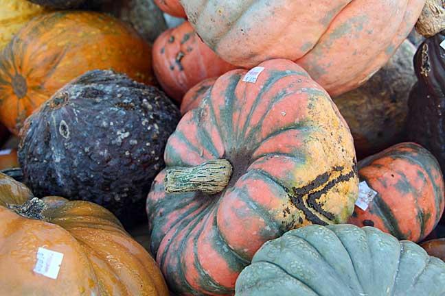 lots-of-pumpkins