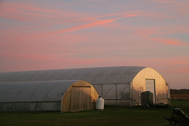 Sunset over the greenhouses