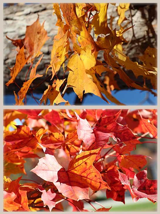 Fall Leaves Inspire Fall Sugar Cookies