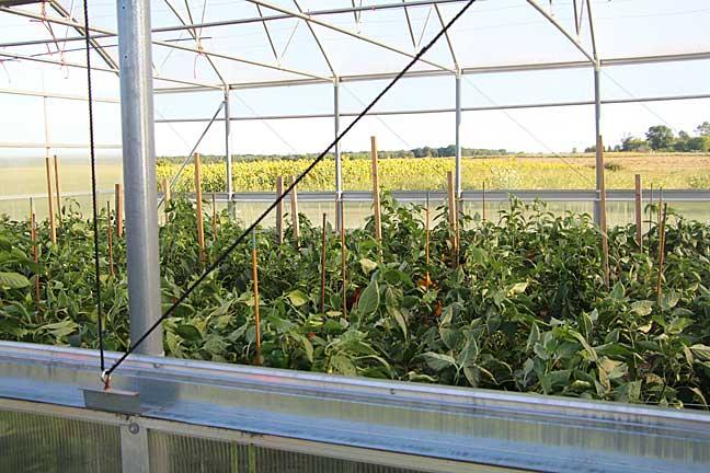 Rare Earth Greenhouse