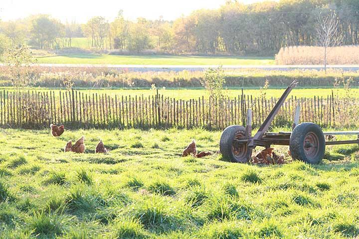 Pre-harvest dinner walk at Rare Earth Farm