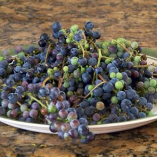 Wild grapes on a plate