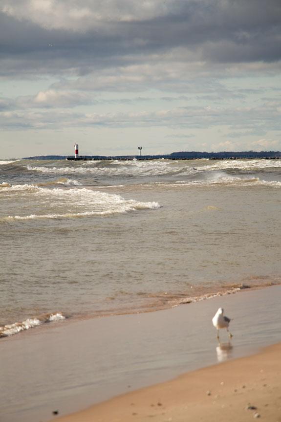gull-on-beach