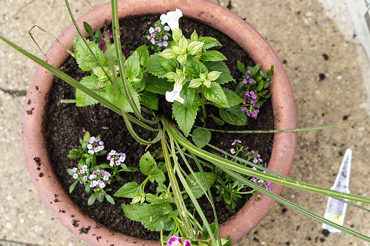 If you are a composter, making homemade potting soil is easy! Just mix with sand and peat or coir. Happy container gardening!