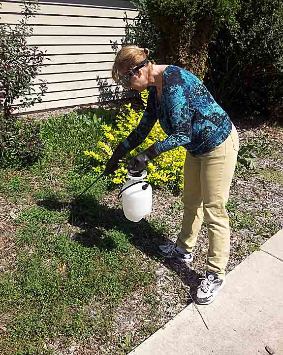 20% Garden Vinegar Weed Killer is kind of like your salad vinegar on steroids (as in 4 times stronger and poisonous). This is our story (hint: it worked)