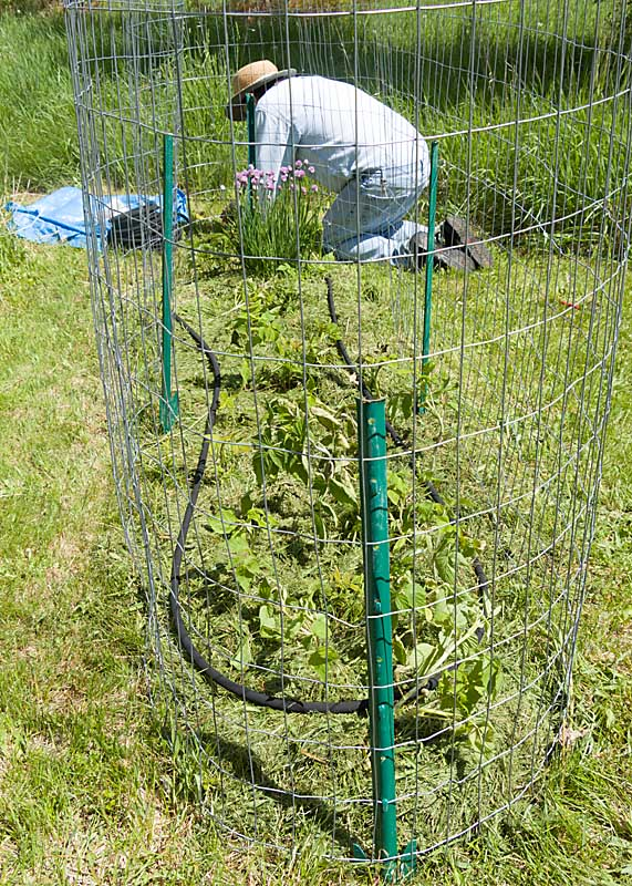 Soaker hose for raspberry garden irrigation