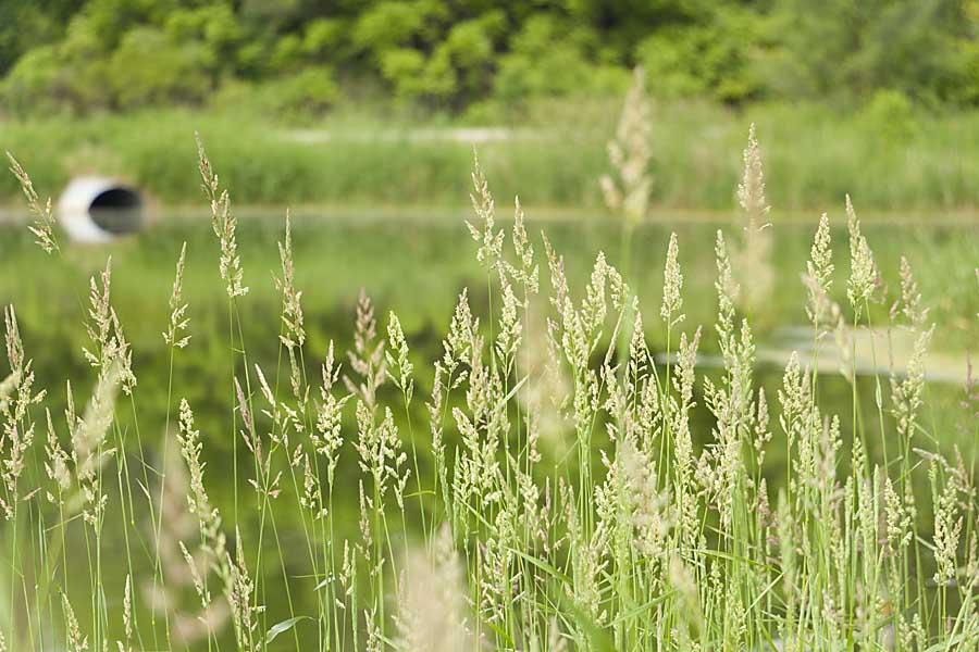 Mequon Nature Preserve