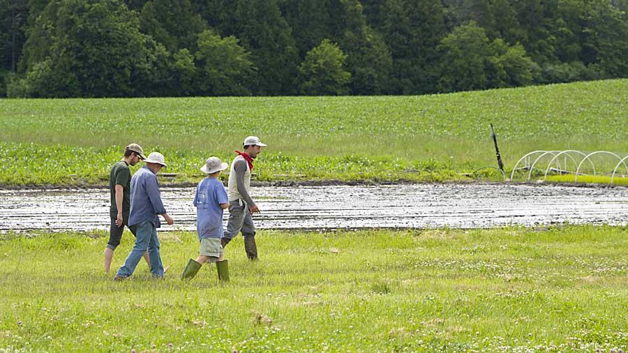 rice planting crew