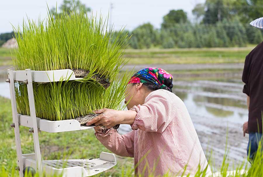 Loading rice plating machine