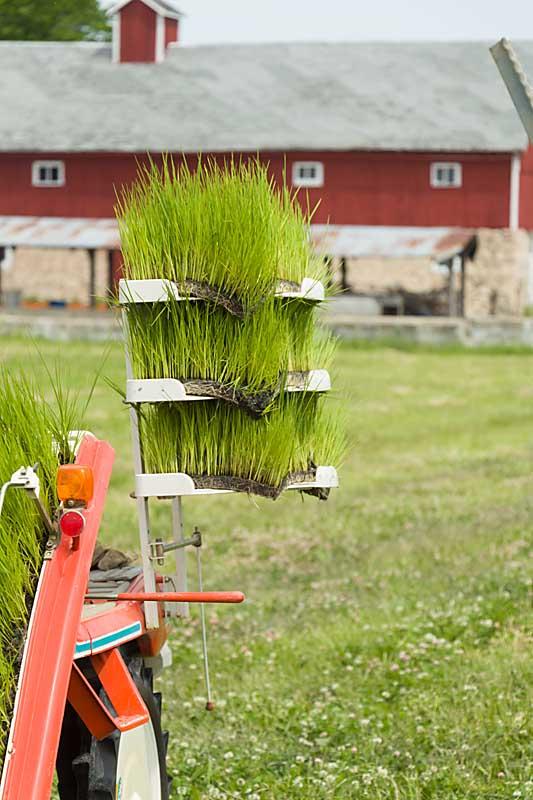 "Rice planter ""storage"""