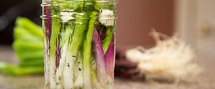Quick Pickled Scallions
