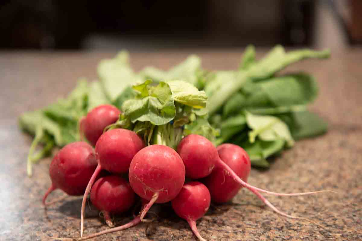 A bunch of radishes with grreens